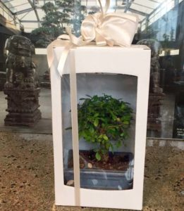 Bomboniera con bonsai