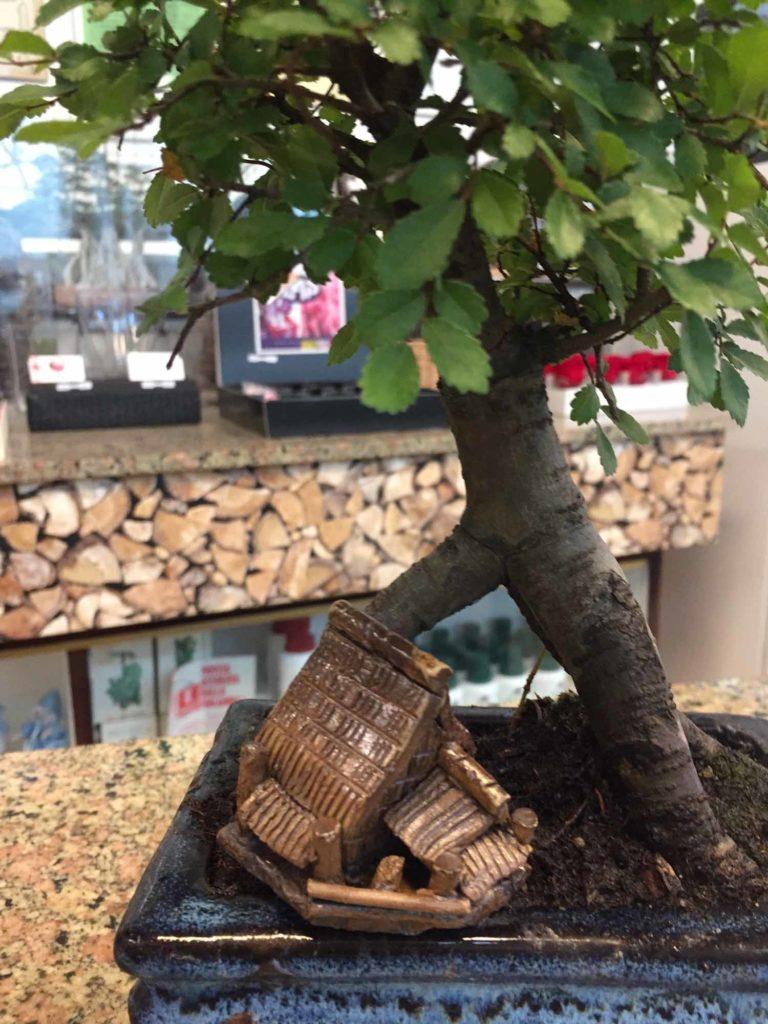 Come annaffiare un bonsai