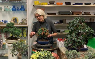 Tempo di bonsai, nuovi arrivi freschi-freschi