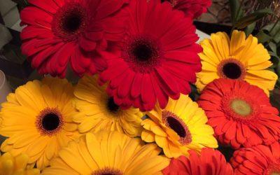 I fiori preferiti a Trieste