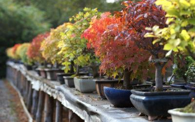 Come curare il bonsai in inverno