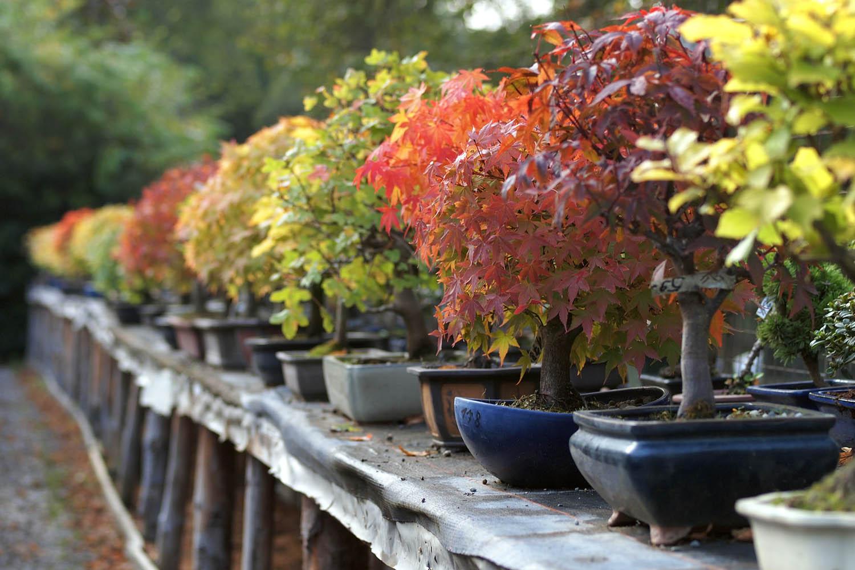 Bonsai autunno inverno